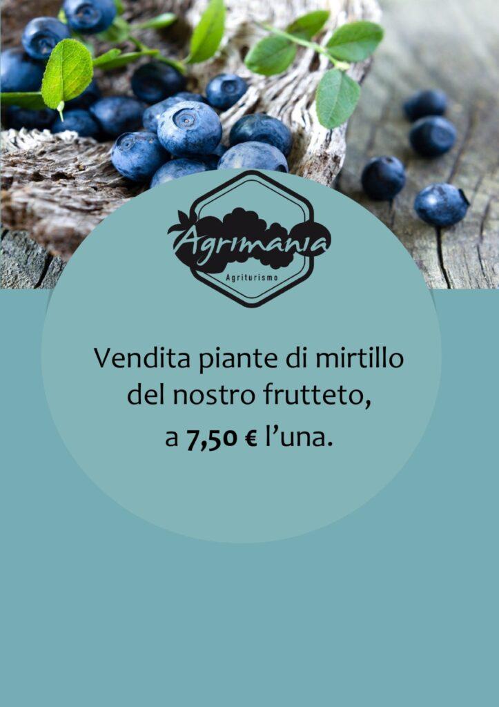 vendita-piante-mirtillo
